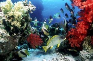 El FOTOSUB es uno de los eventos turísticos más importantes de Cuba