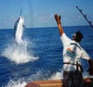 Se podrán capturar casteros y agujas entre otros tipos de peces