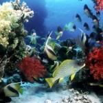 Los fondos marinos de Cuba son una fuente de riquezas para el país