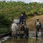 Cuba debe incrementar sus niveles de producción agrícola