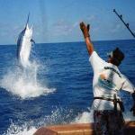 La pesca de la aguja es uno de los eventos deportivos más importantes en Cuba