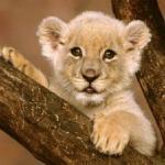 El Zoológico Nacional es el mayor de los 23 zoológicos que existen en Cuba